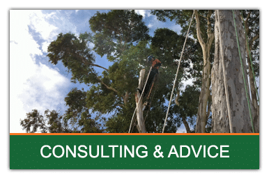 but-consult